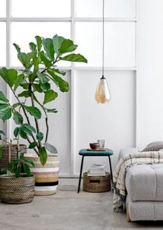 Plants for a shoestring budget
