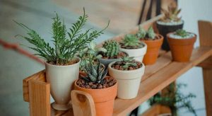 How To Style Plants   Plant Styling