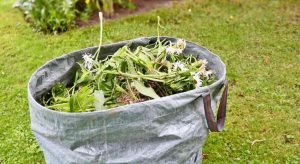 Best All-Natural DIY Weed Killer You Must Try