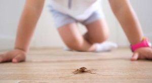 Pet Safe Roach Killer {Get Rid of Those Pests}